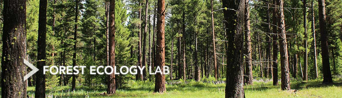 research paper on forest ecology This sample ecology and economy research paper is published for educational and informational purposes only as exemplified by the clear cut forest.